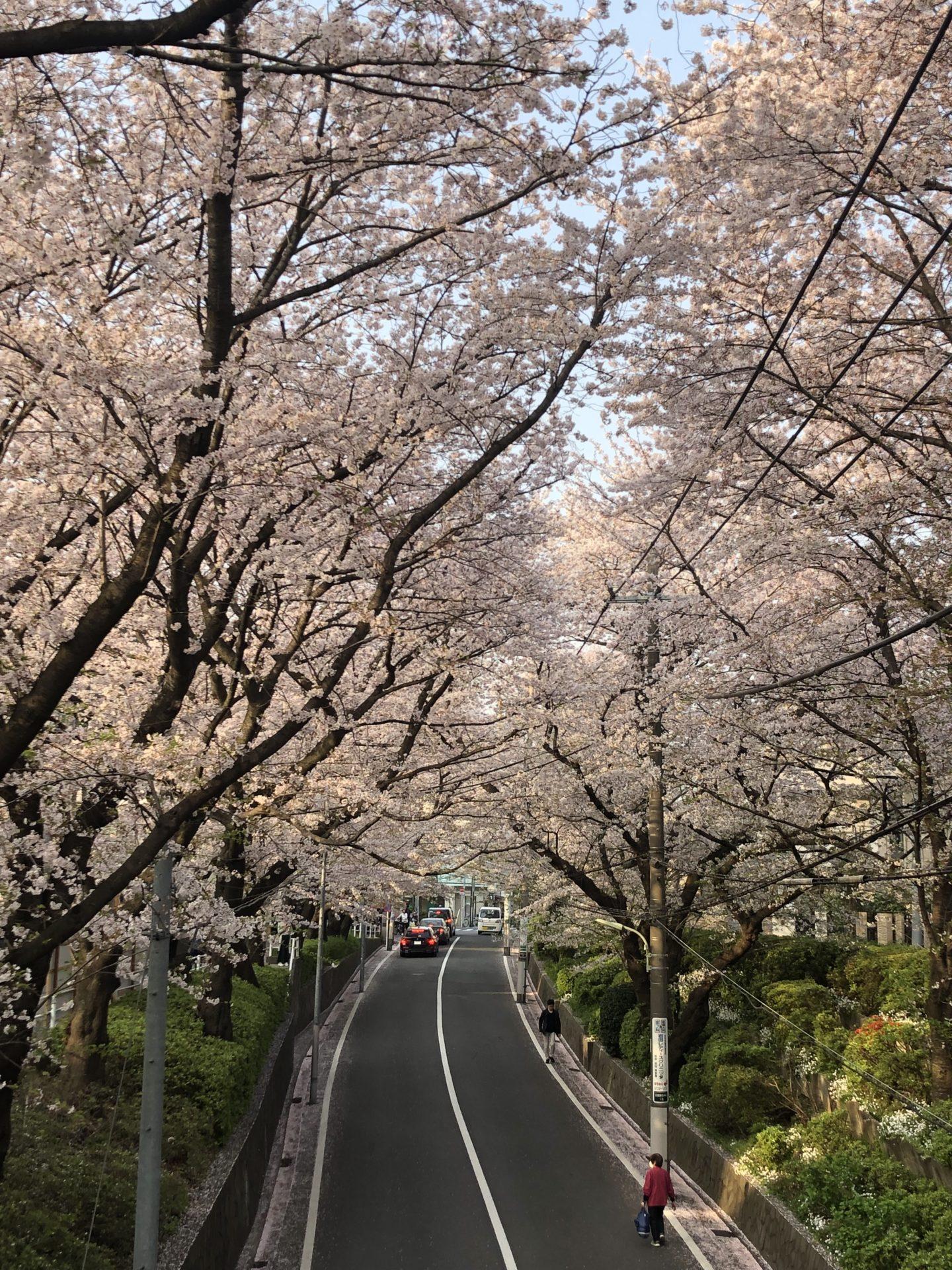 2021/3月桜坂