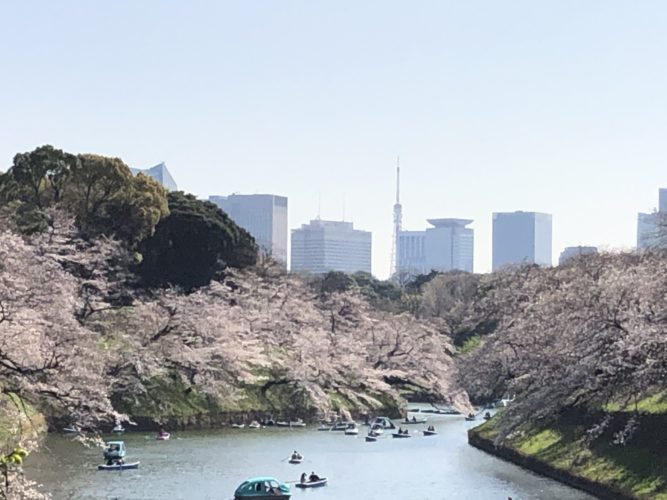 2021/3 東京千鳥ヶ淵 02